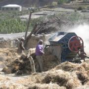 People in hay